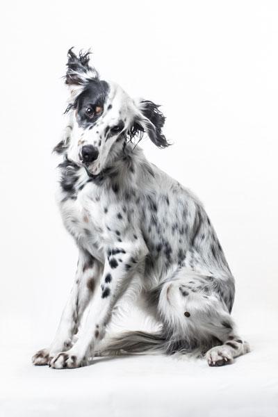 Photographe animalier Gironde - Bordeaux - Libourne - CUB